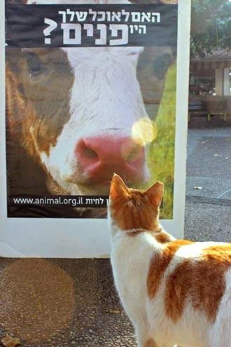 צילום: Dalit Salomon. חתול מתעניין בהפגנה טבעונית בחיפה, מרכז זיו.