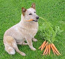 מזון צמחי לכלבים