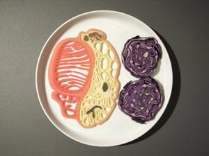 עיצוב דמיוני של בשר מלאכותי לפי דימוי של חתך במעי פרה (ג'יימס קינג, אפריל 2007)